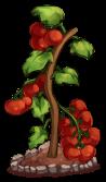 http://transformice.com/images/x_transformice/x_evt/x_evt_21/gsvnkdsop/tomates.png